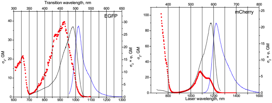 Absorption spectra of EGFP and mCherry